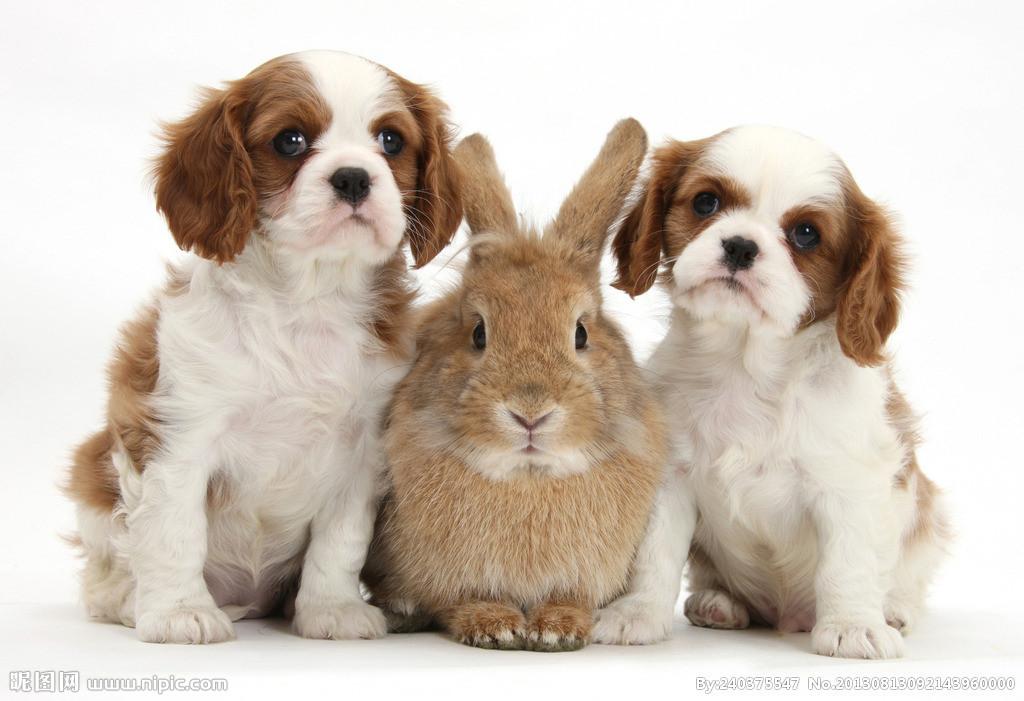 请选出你最喜欢的动物