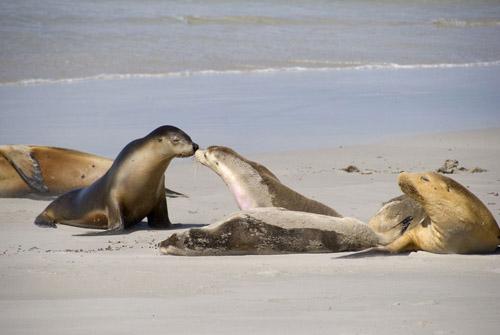 海边各种动物简笔画