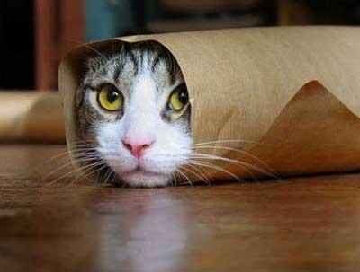 因为猫咪与人能够共同感染的传染病