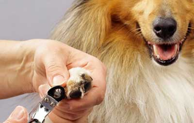 指甲图片 动物款式
