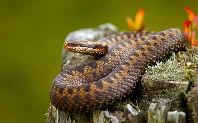 二沙岛体育公园有蛇
